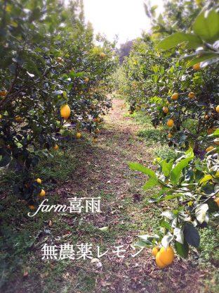 レモン農家 喜雨さん